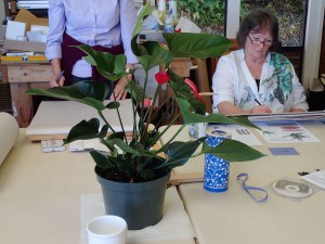 This week's subject, an anthurium plant